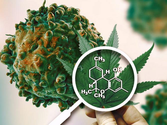 Конопля и онкология выпечка из марихуаны